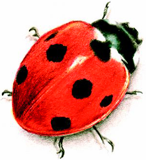 ladybird temp tattoos