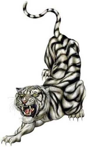 TIGER2(MED8X6CM)(1)