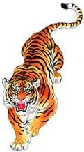 TIGER5(MED8X5CM)