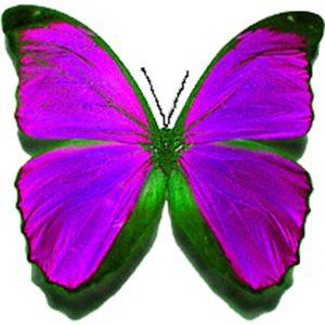 ButterflyPurple